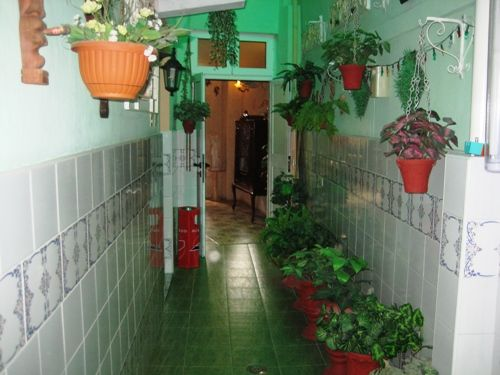 'plants' Casas particulares are an alternative to hotels in Cuba.