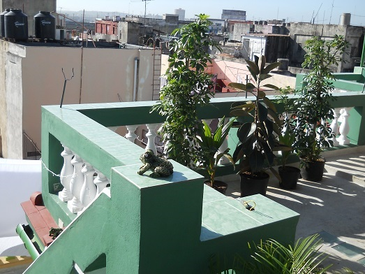 'Roof terrace'