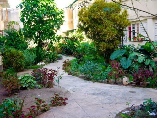 'Building garden' Casas particulares are an alternative to hotels in Cuba.