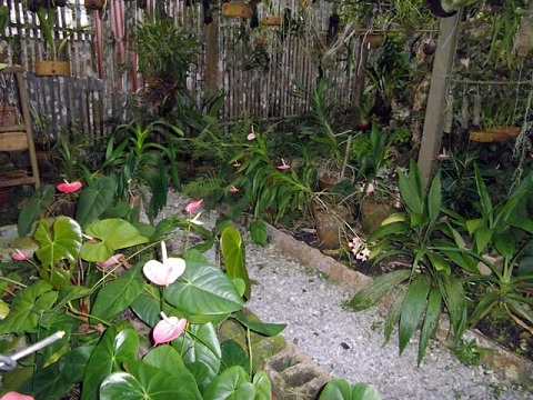 'Orchids Garden' Casas particulares are an alternative to hotels in Cuba.